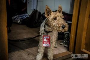 Künstlerhund, Foto: Steffen Neumeister